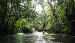 Floating White River Jamaica